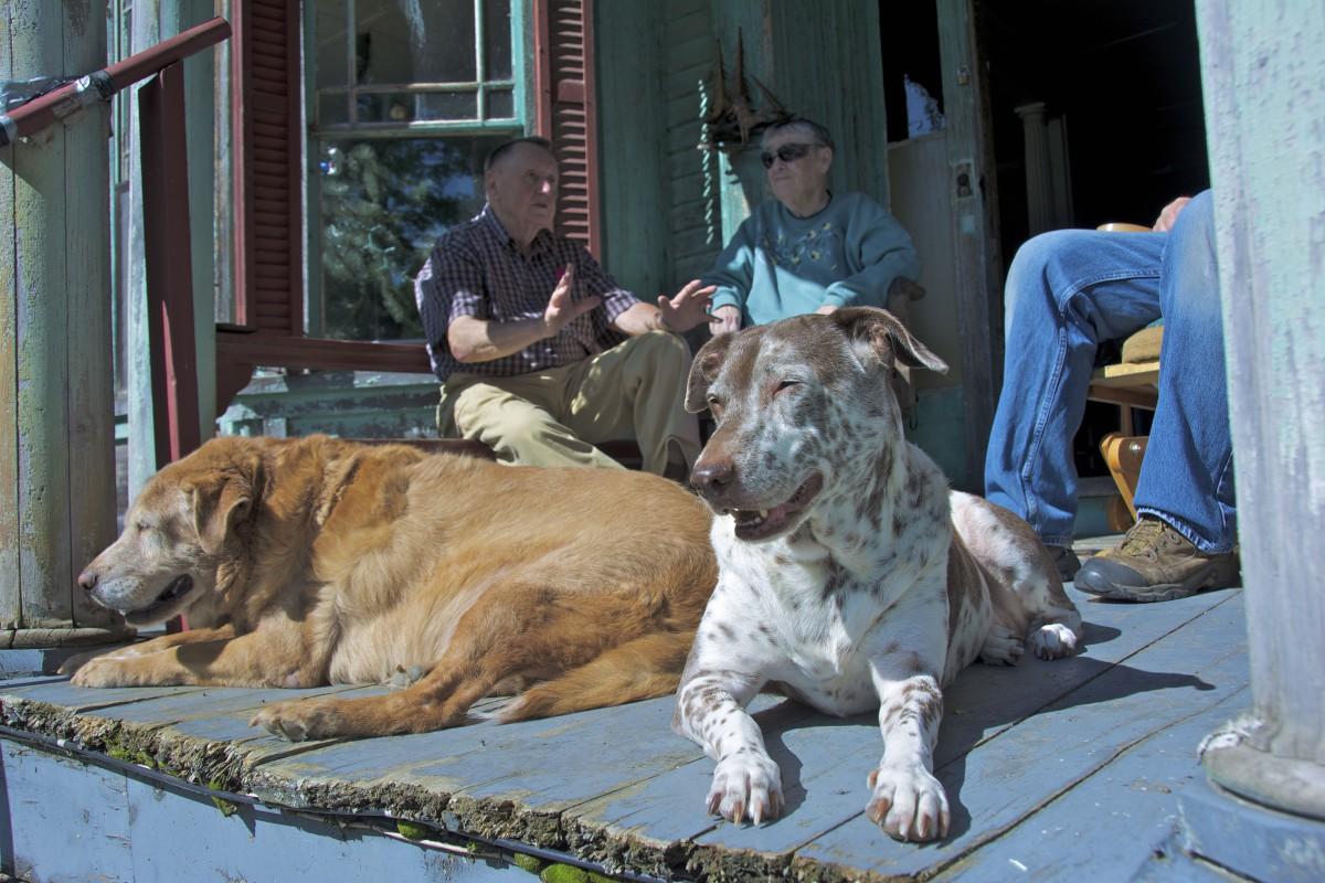 porch pups