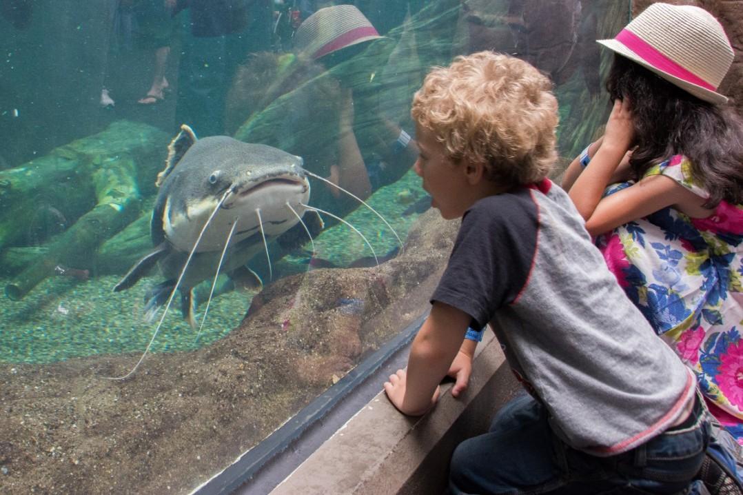 kids and fish