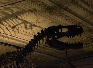 Natural History Museum dino